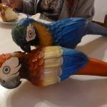 Birthday celebration parrots (macaws)