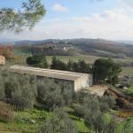 Landscape - Fattoria Poggio Alloro Photo