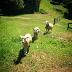Bellbird Ridge Farmstay B&B Foto