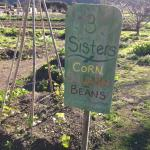 Farm at Earthbound - See what's planted!