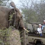 Elephant saying hi