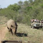 Rhino coming to check us out