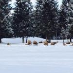 Foto di Bighorn Meadows Resort