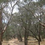 4WD track into the Warby Ovens National Park nearby