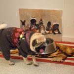 Bull Dog Cafe