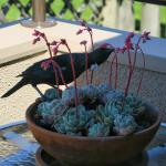 Tui on Everton BnB balcony