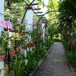 orchid path