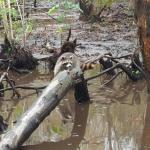 Photo de Pearl River Eco Tours