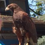 Hawk Creek Wildlife Center