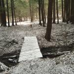 Foto de Allegany State Park Campground