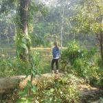 Jungle Safari Walk