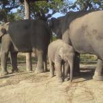 Chitwan Elephant Breeding Centre