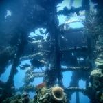 HMAS Swan Dive Wreck