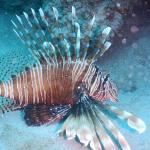 Tamarin OceanPro Divingcenter Φωτογραφία
