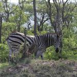 Echo Africa Safaris & Transfers - Day Tours