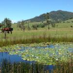 Horse, mountains and lily pond