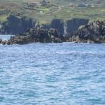 Photo de Whale Watch West Cork