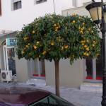 Oranger dans la rue