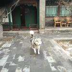 Grounds and one of the hotel's 2 husky dogs