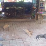 Un refugio de gatos, una pena