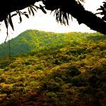 Tne view from the Rainforest Platform.