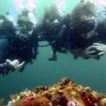 Photo de Blue Marlin Dive - Gili Trawangan