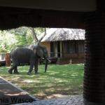 Visit from the elephants.