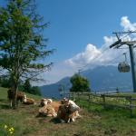 Hotel Tyrol am Wilden Kaiser Foto