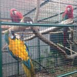 Parc Animalier Pierre Challandes