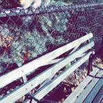 Foto de Tompkins Square Park