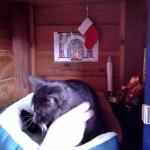 Your friendly feline greeter at Gastronome.  He has a little booth and even has his own stocking