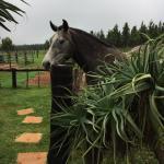 Foto de Kaapsehoop Horse Trails Day Trips