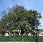 The tree where Our Lady Of Fatima appear to the children