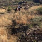 Equitrails Namibia Foto