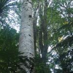 YHA Whangarei Falls Foto
