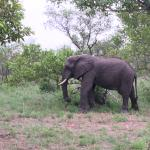 one of the many elephant we saw