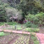 Fesh herbs and vegies grown at bungalows are part of the dining enjoyment