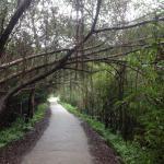 bike path to Bungalows