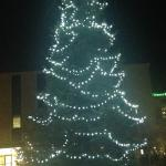 Tree in front of hotel