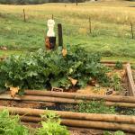 the vege garden - help yourself