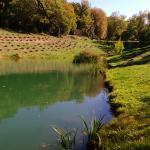 l'étang du Parfum des Collines