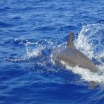 Foto de Kona Diving Company