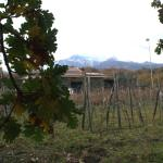 Photo of Agriturismo Le case del merlo