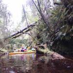 Okarito Nature Tours Foto
