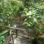 Colo-I-Suva Forest Park