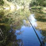 Sugar grove trophy trout farm