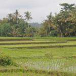 View of surrounding area