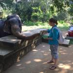 Bandi Sri Lanka - Day Tours