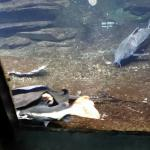 Aquarium Tropical de la Porte Doree