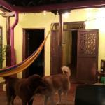 Photo of Alegria's Hostel